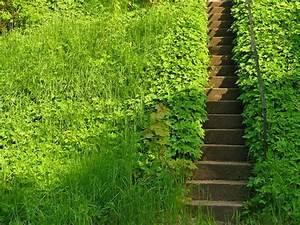 Zahradní schody svépomocí