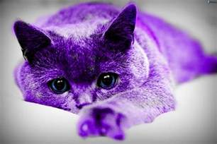 purple cat purple cat by mrverdi on deviantart