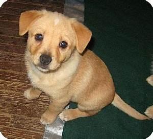 Downey, CA - Beagle/Pomeranian Mix. Meet Bubbles a Puppy ...