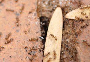 Ameisen In Der Wand : ameisen im mauerwerk was k nnen sie dagegen tun ~ Frokenaadalensverden.com Haus und Dekorationen