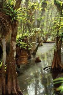 Fakahatchee Strand Preserve State Park Florida
