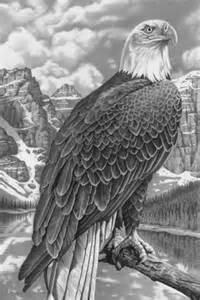 Bald Eagle Pencil Drawing