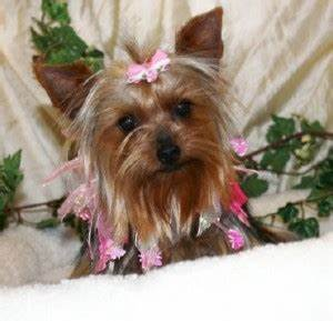 Little Dog Breed Names