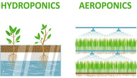 Aeroponics System Information For Beginners