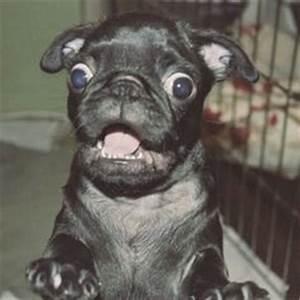 Shocked Dog Face