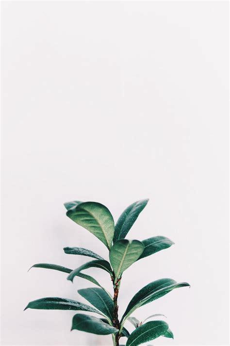 aesthetic minimalist wallpapers
