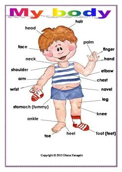 body poster  classroom  effective teaching aids tpt