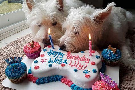 toronto bakery    dog  birthday cake