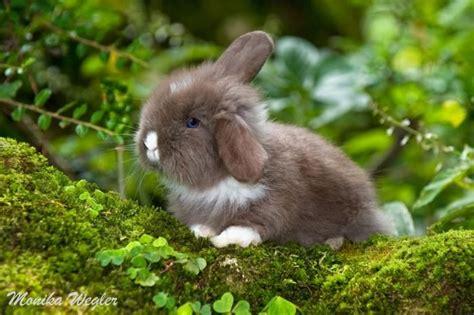 foto  suesse teddy widder baby kaninchen vom zuechter mit