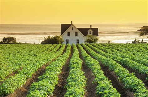 Cheap Kitchen Island Ideas - beautiful farms on prince edward island canada real life green gables farms