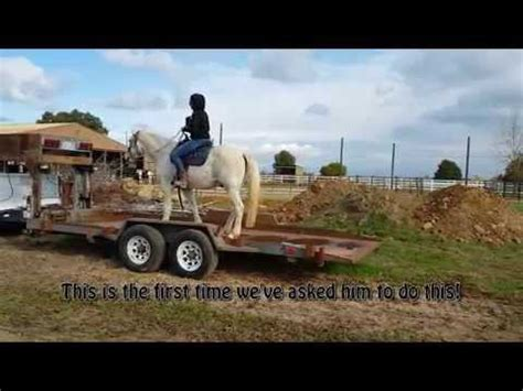 tennessee walking horse gelding  sale  sacramento