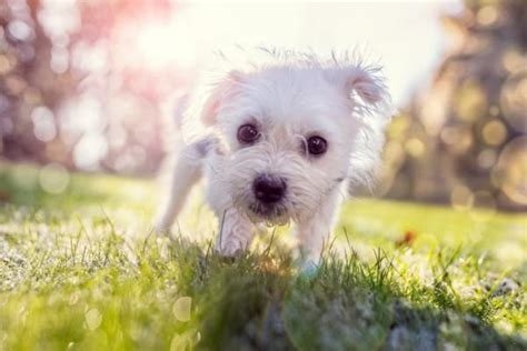 fiori di bach per i cani fiori di bach per cani agitati e paurosi effetti e consigli