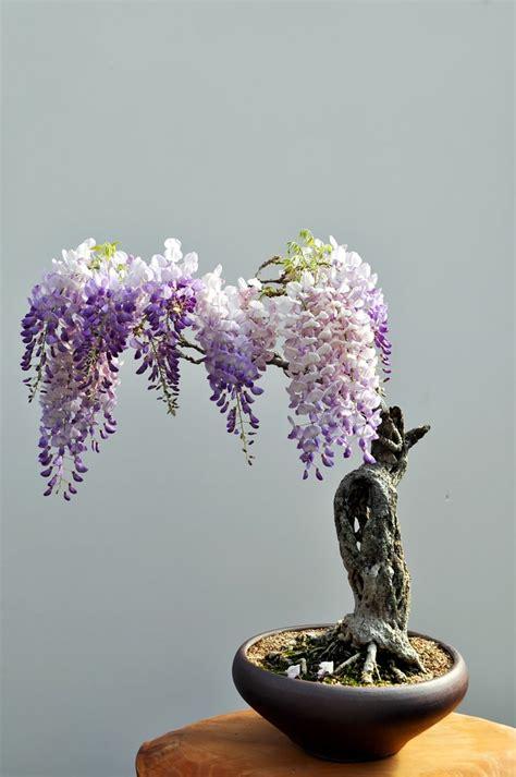 bonsai baum für draußen 20 der sch 246 nsten bonsai b 228 ume als inspiration im fr 252 hling
