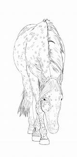 Horse Coloring Appaloosa Deviantart Pages Line Horses Palomino Drawings Sheets Animals Colouring Adult Lineart Drawing Howrse Adults Printable Deviant Draw sketch template
