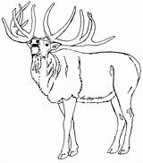 Elk Coloring Pages Animals Animal Sheets Template Sketch sketch template