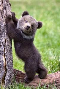 #FridayBear | Bears | Pinterest | Bears, Animal and Baby ...