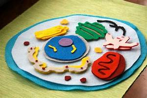 Animal Cell Model Felt Set Science Toy By Cakeinthemorn On
