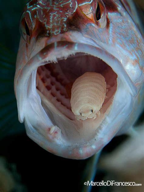 choosing   lens  dslr underwater mozaik uw