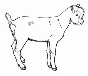 Goat Drawing Outline