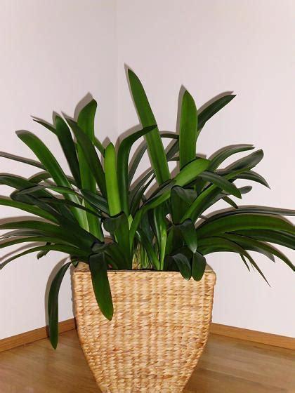 pflanzenname gruenpflanze pflanzen pflanzenpflege
