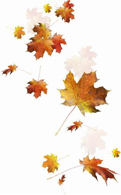 Transparent Fall Leaf Leaves Autumn Clipart Falling