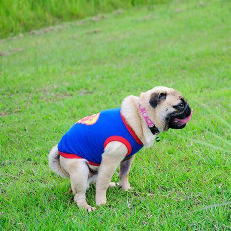 puppy diarrhea dog diarrhea blood straining dog puppy