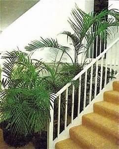 Pflanzen Im Treppenhaus : zimmer und gartenblumen ~ Orissabook.com Haus und Dekorationen