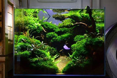 cool aquascapes favourites display tank at aquatic amazing scenery