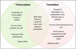 How Is Dna Replication Different From Rna Transcription