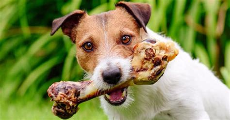 fda bone treats causing dog deaths illnesses cbs news