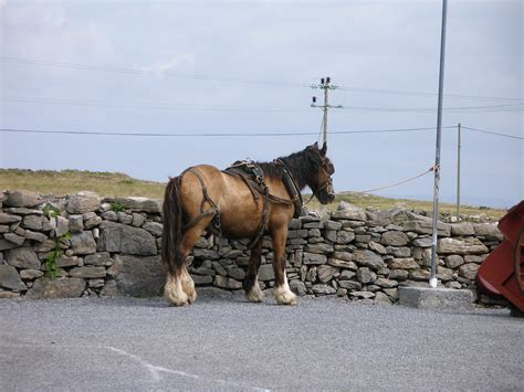 ireland horse bernd