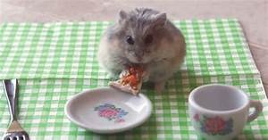 Hamster Eats Miniature Pizza In Youtube Clip
