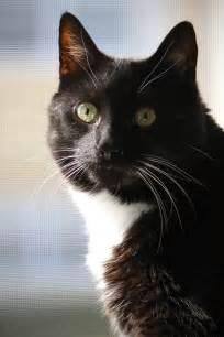 tuxedo cat names pook the tuxedo cat m e o w