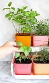 Make a Colorful Indoor Herb Garden - A Beautiful Mess indoor herb garden