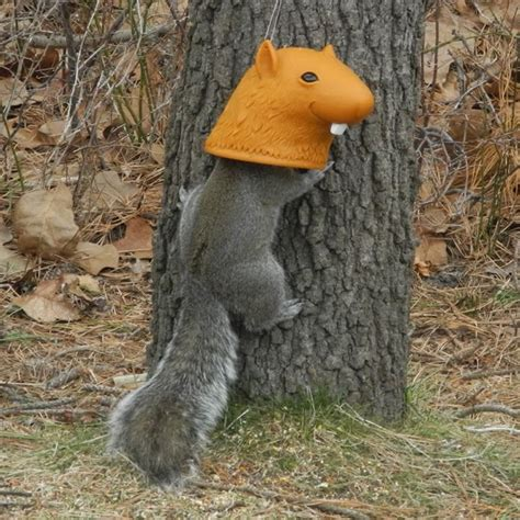 horse head squirrel feeders