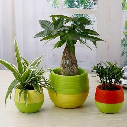 jual beli pot bunga kaktus pot tanaman hias