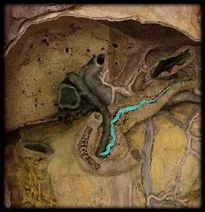 digestive at Kansas State University - StudyBlue