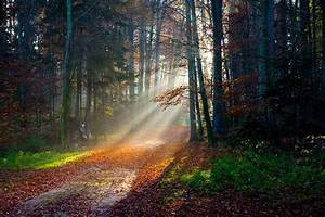 12 Rays Of Light Sun Rays Forest Fall Path Leaves Trees Grass Nature