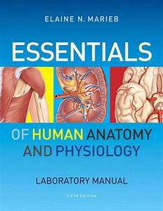 Essentials Of Human Anatomy  U0026 Physiology Laboratory Manual