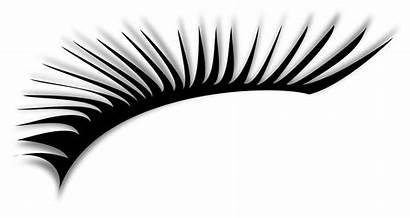 Clipart Eyelashes Printable Transparent Eyebrow Fake Webstockreview