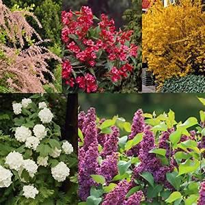 Sichtschutz Pflanzen Bluhend Sch Ne Sichtschutz Pflanzen Nowaday
