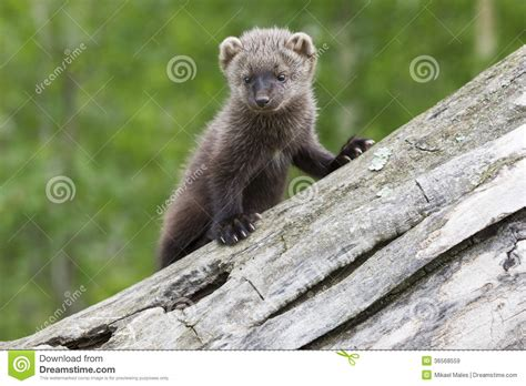 Baby Fisher Royalty Free Stock Images