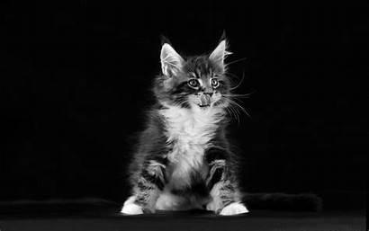 Desktop Kitten Wallpapers Resolution Wallpapers13