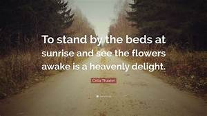 "Celia Thaxter Quote: ""To stand by the beds at sunrise and ..."