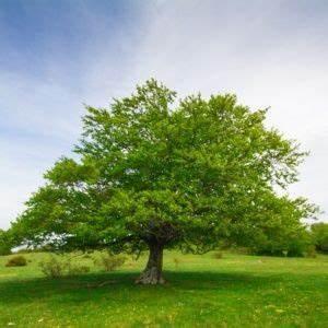 Les Plus Beaux Arbres Pour Le Jardin : arbre prix ~ Premium-room.com Idées de Décoration