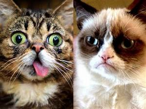 Top 5 Adorable Internet Animals | Lil Bub vs Grumpy Cat ...