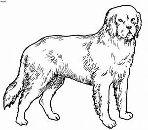 Domestic Animals Coloring Pages