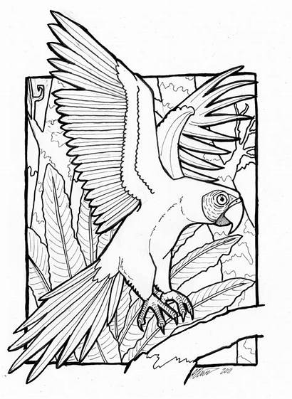 Coloring Pages Macaw Colouring Parrot Bird Birds