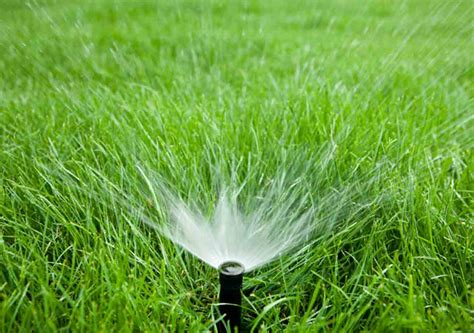 awesome watering tips for a quality green lawn best pick