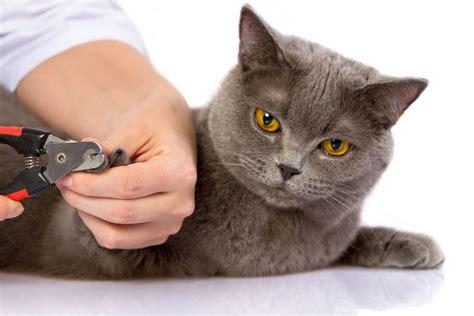 comment  pourquoi couper griffes chat